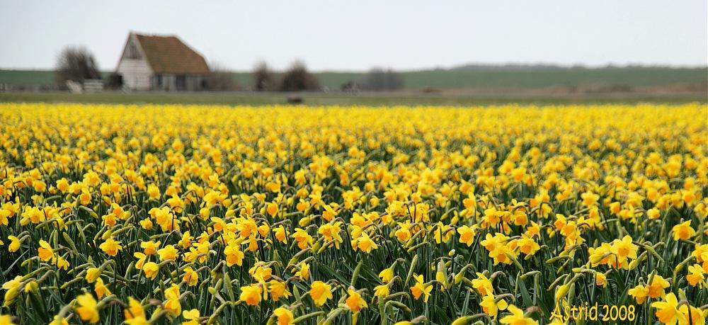 photoblog image .....Yellow......