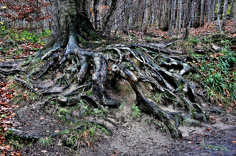 photoblog image ....Roots...