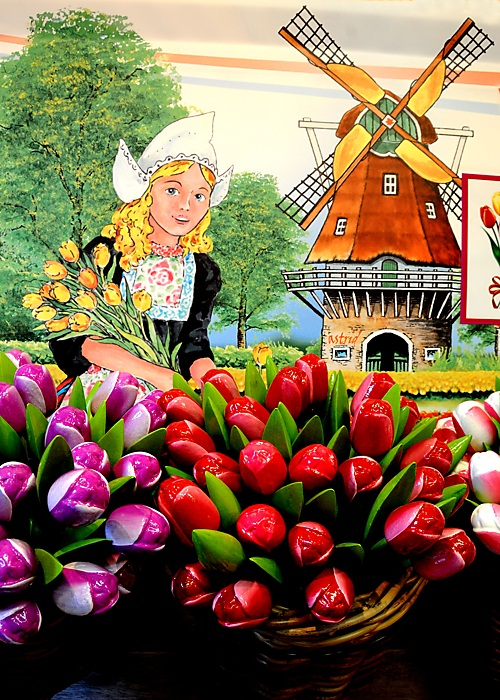 photoblog image ....Tulips from Amsterdam....
